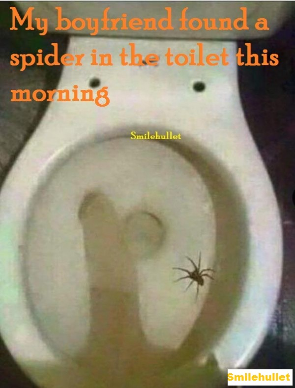 Just found a spider in the toilet this morning